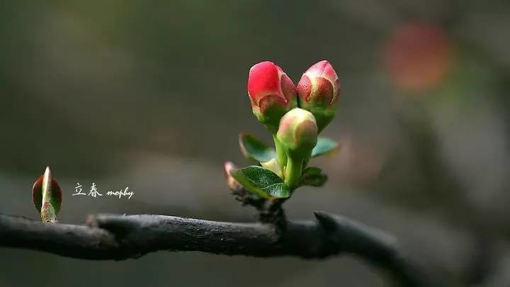 节气养生 | 今日立春,万物复苏,人要怎么养生才好呢?
