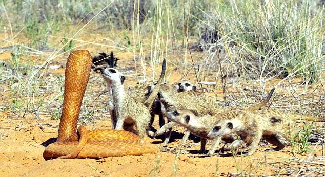 看摄影师如何近距离拍摄野生动物(组图)_国际新闻_环球网