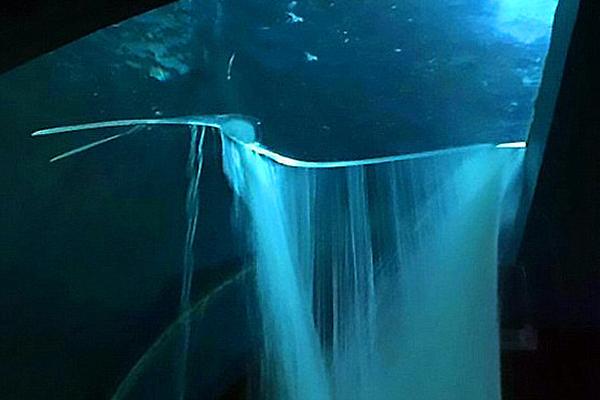 墨西哥水族馆鲨鱼水箱破裂导致街道被淹没