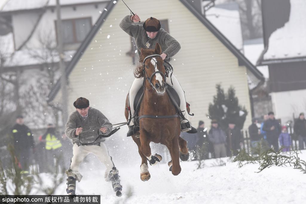 波兰举行传统赛马活动 结合滑雪趣味十足