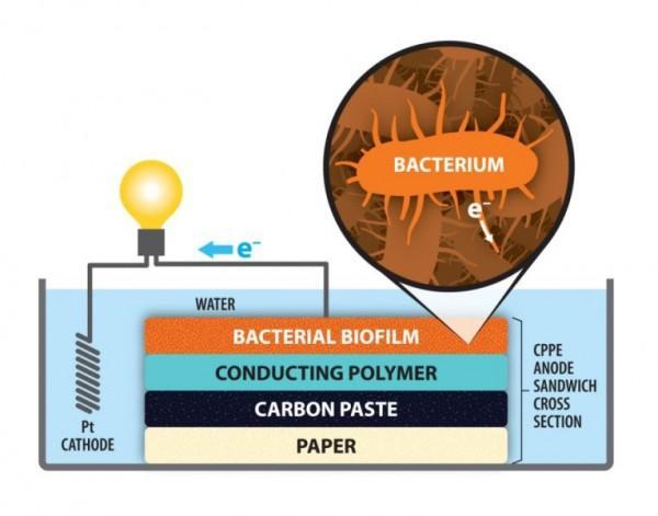 用纸做成的电极让微生物燃料电池更廉价高效