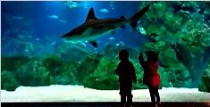 水族馆水箱破裂 13条鲨鱼上街游泳吓傻路人