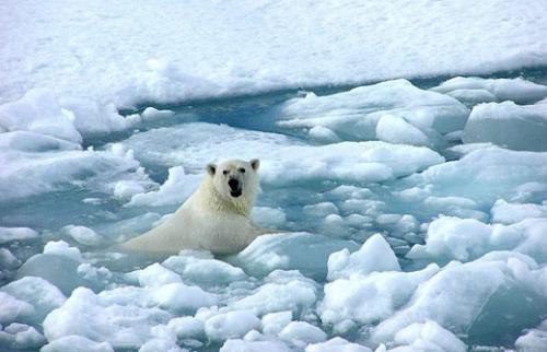 """美科学家提议在北极建大型抽水泵进行""""造冰""""运动"""