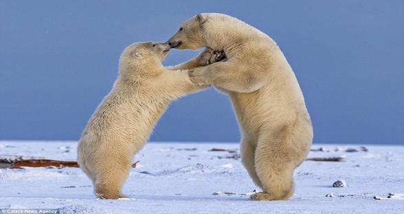 情人节!世界各地的动物大秀恩爱 简直暖化了