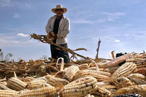 反击特朗普建墙威胁 墨西哥欲抵制美国玉米