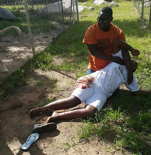 女游客津巴布韦拍照时遭狮子袭击受伤