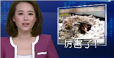 领地被侵 皮皮虾打断螃蟹腿