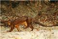 7大稀有的灵猫