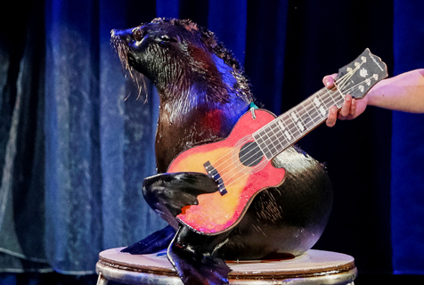 乌克兰马戏团动物表演弹吉他呆萌可爱