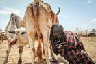 非洲土著日行10小时找水
