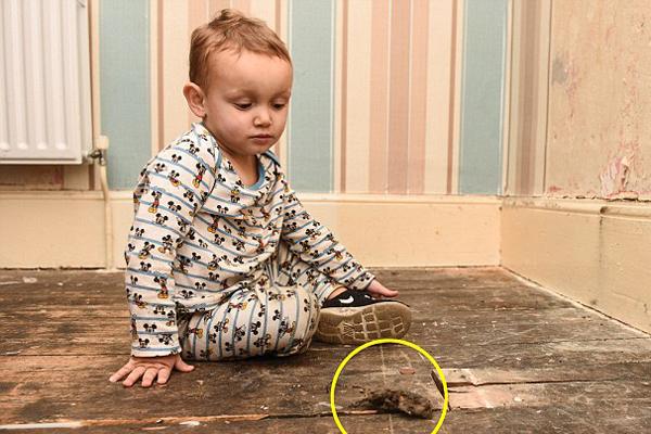 惊吓!英母子8人因住所数百只老鼠活动被迫搬家
