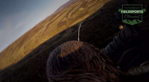 英金雕携摄像机全程记录凶猛捕食雪兔画面