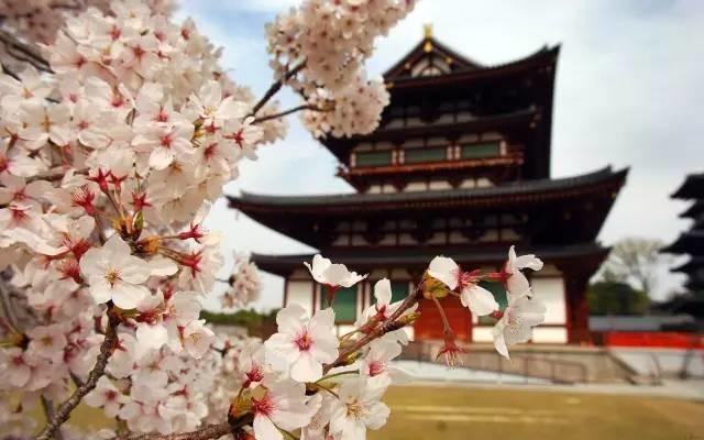 日本樱花季|花都开好了,赏樱温泉深度之旅,你来吗?