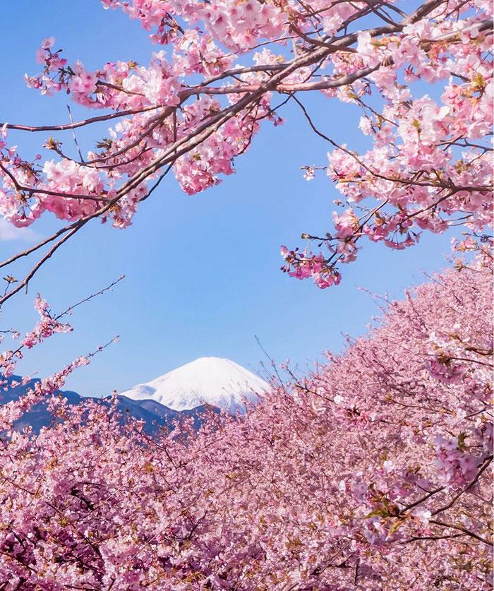 粉色美国风景图片