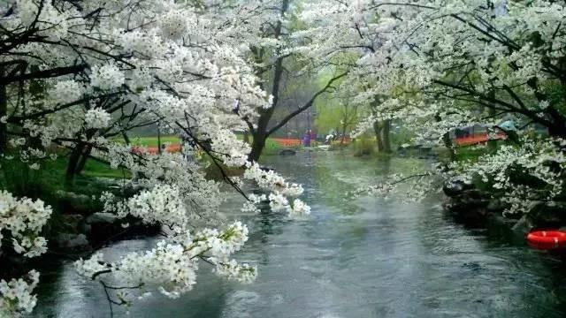 阳春三月   春意盎然 - 夏日晚风 - 夏日晚风的博客
