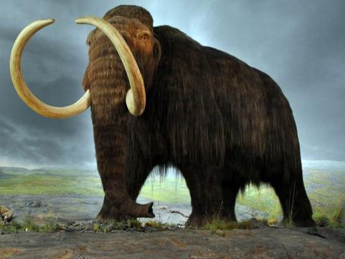 """哈佛研究团队:有望在2年内""""复活""""猛犸象"""