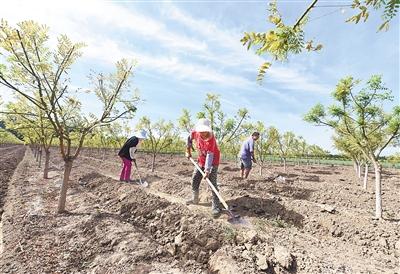 河北建设京津保生态过渡带亮探访 扩规模 引资源 建精品