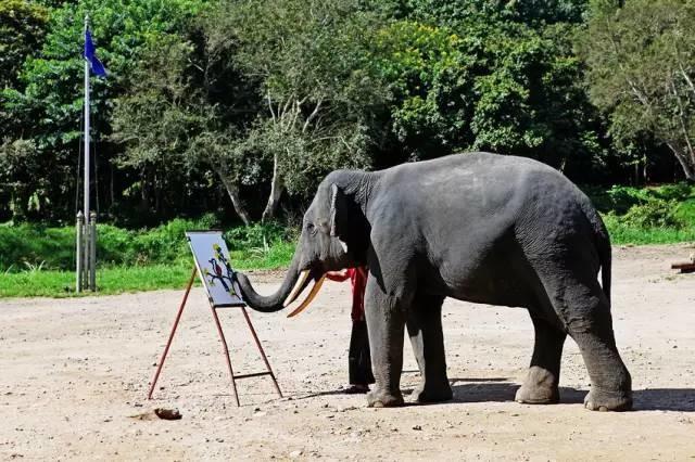 太残忍!我们在泰国骑大象的背后,真相竟然如此黑暗!