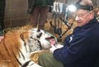 牙医给东北虎做牙科手术