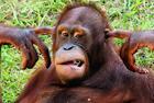 动物滑稽表情令人捧腹