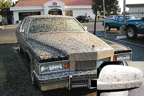 爱车身上经常有鸟粪 原来都是颜色惹的祸