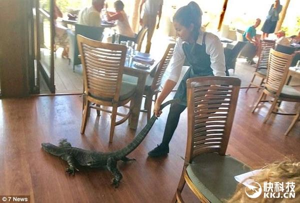 2米巨蜥闯入餐厅偷食 25岁女服务员徒手拖走