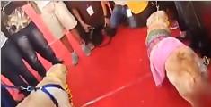 印度一对狗狗情侣举行婚礼 甜蜜温馨