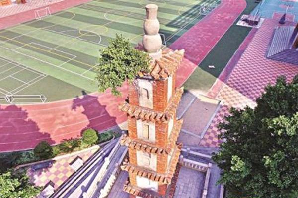 福建388年古塔长树 郑成功曾在塔边读书