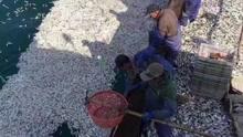 鱼群突然浮出水面 浙江渔船白捡2万斤黄鱼