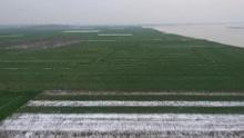 雪后初霁 航拍黄河岸麦田绿意浓