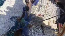 鱼群浮出海面 渔民捞到手酸