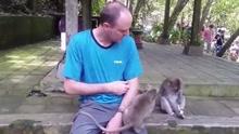 教训深刻 国外男游客抚摸小猴子被猴妈妈咬伤