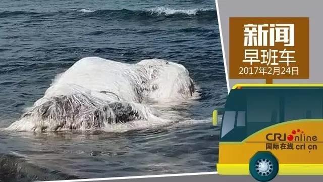 新闻早班车 ▏地震后菲律宾海滩上出现巨大拖把状不明物体