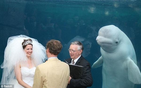 新人结婚被白鲸抢镜 网上掀起一场PS大战