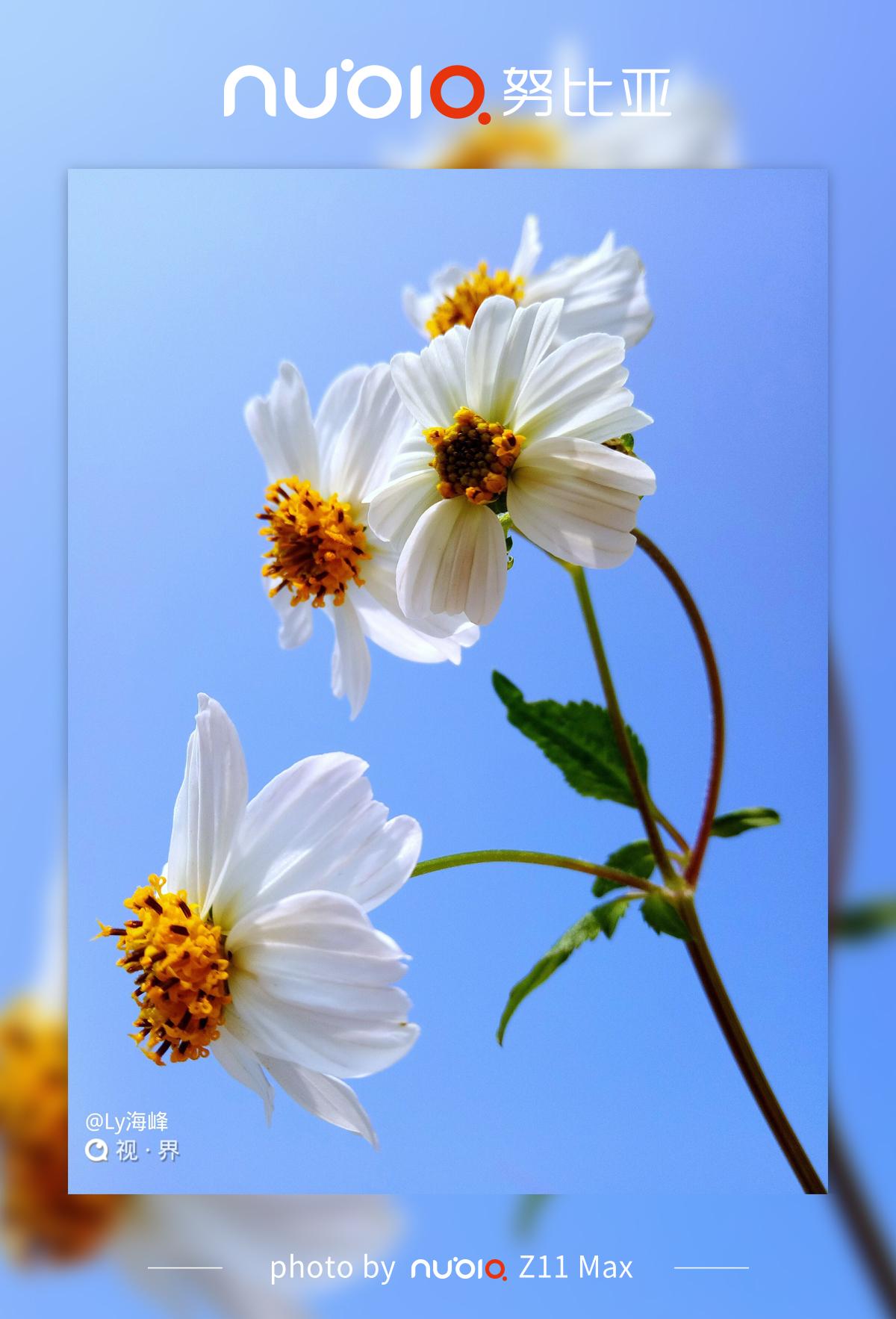 #BeYourself#寂寞且骄傲开放的小花总能让躁动的心慢慢平静用心聆听花的呼吸找回内心最