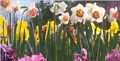 四季花谷 踏青赏花好去处