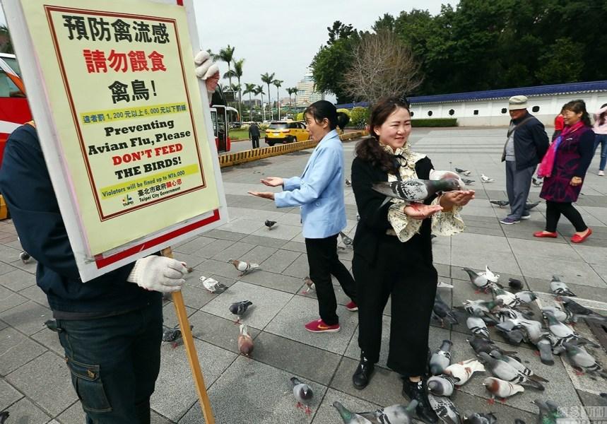 明升m88.com禽流感蔓延 大陆游客不听劝阻喂鸽子