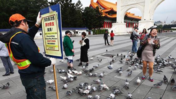 台湾禽流感蔓延 大陆游客不听劝阻喂鸽子
