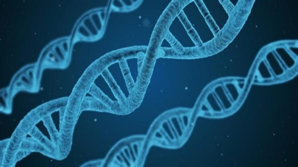 DNA生物硬盘:每克存储215PB数据 千年不坏