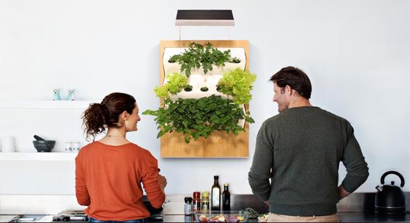"""想在家里种菜?Herbert能让家里的墙变""""菜地"""""""