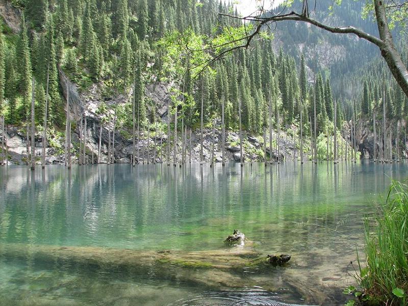哈萨克斯坦一湖泊水下森林似仙境
