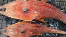 吓呆!渔民捕到神秘海洋生物 似鱼又像虾
