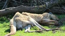 《扒神嗨评》英国一动物园4年养死500只动物