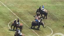 泰国大象马球锦标赛大象满场跑