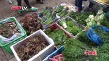 早春野菜上市 市民品尝舌尖上的春天
