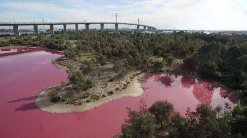 墨尔本郊区现粉红湖泊色彩鲜艳 专家:自然现象