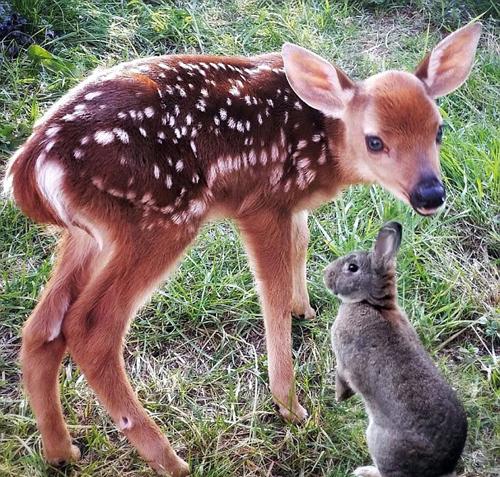 动物救助中心上演了这部迪斯尼动画中的一幕——一只小鹿