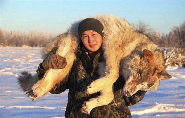 俄罗斯狼群泛滥猎杀动物:提议开发直升机游猎项目