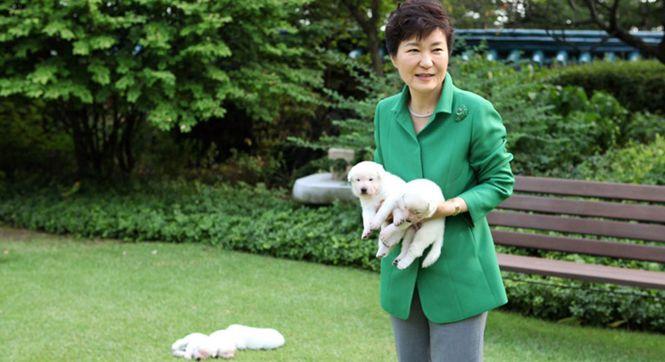 朴槿惠被指涉嫌虐待动物 搬离青瓦台时遗弃9只狗