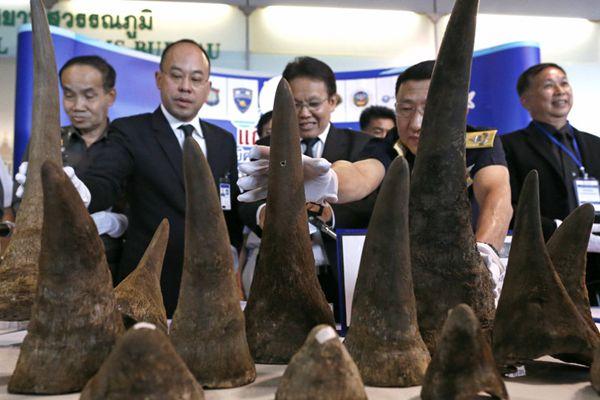泰国海关截获一批非洲犀牛角 价值近5百万美元